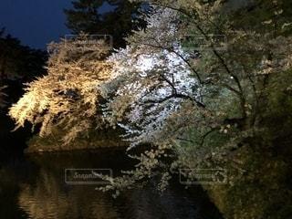 木の隣に水します。の写真・画像素材[1148736]