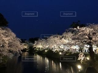弘前春の風物詩の写真・画像素材[1148737]