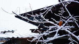雪化粧の写真・画像素材[1036936]
