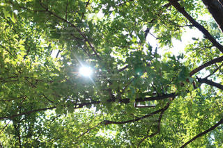 フォレスト内のツリーの写真・画像素材[1370966]