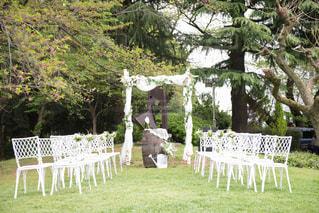 森の結婚式の写真・画像素材[1039606]