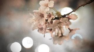 テーブルの上に花の花瓶の写真・画像素材[3083719]