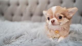 犬のクローズアップの写真・画像素材[3635325]