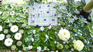 花手水の写真・画像素材[4172607]