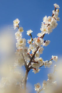 近くの花のアップの写真・画像素材[1037279]