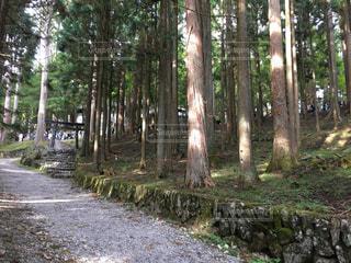 神社へ続く道の写真・画像素材[1038552]