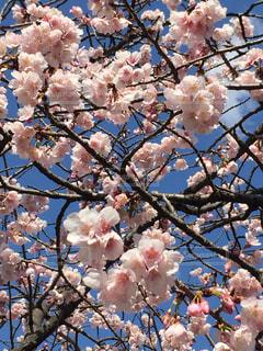 ピンクの空の写真・画像素材[1038336]