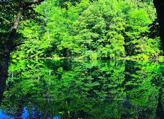 森の大きな緑の木 - No.1037989