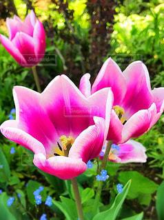 近くの花のアップの写真・画像素材[1038319]
