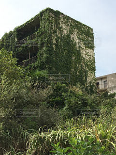 蔦に覆われた廃墟アパート群の写真・画像素材[1074275]