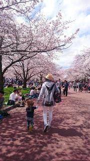 桜並木の中での写真・画像素材[1049731]