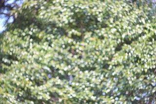 近くの木のアップの写真・画像素材[1038350]
