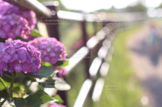 近くの花のアップの写真・画像素材[1041939]