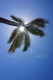 ヤシの木の写真・画像素材[1038468]