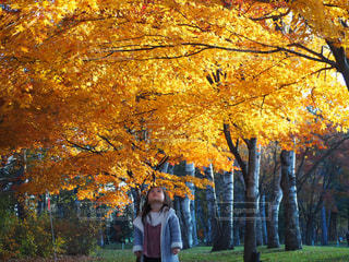 木を見上げる幼女の写真・画像素材[1038235]