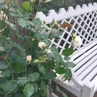花の写真・画像素材[2148399]