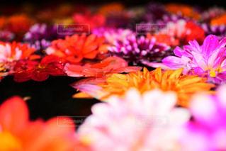 カラフルな花たちの写真・画像素材[1038493]