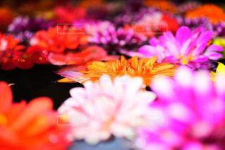 カラフルな花たちの写真・画像素材[1038494]