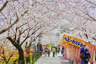桜と屋台の写真・画像素材[1089040]