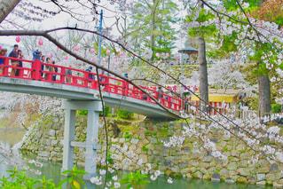 桜と赤い橋の写真・画像素材[1089041]