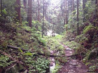 森林 - No.144968