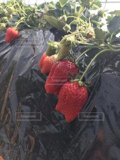 赤の写真・画像素材[372311]