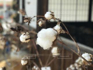 白の写真・画像素材[399408]