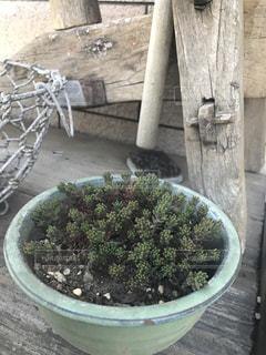 植物の写真・画像素材[461441]