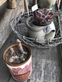 植物 - No.461442