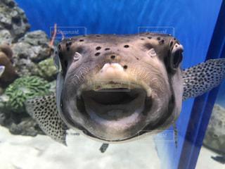 近くに魚のアップの写真・画像素材[1225848]