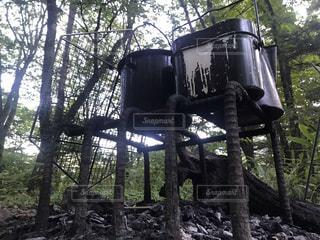 森の大きな木 キャンプの写真・画像素材[1517950]