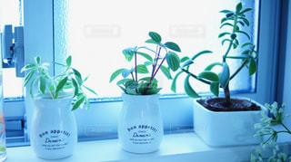 窓際の観葉植物の写真・画像素材[1053282]