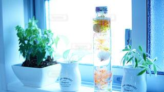 窓際の観葉植物の写真・画像素材[1053284]