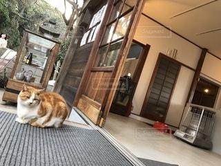 座っている猫の写真・画像素材[1076283]