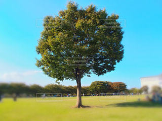 背景の木と大規模なグリーン フィールドの写真・画像素材[1045031]
