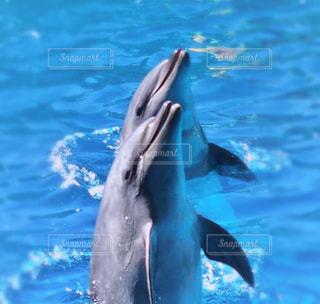 イルカの兄弟の写真・画像素材[1045090]
