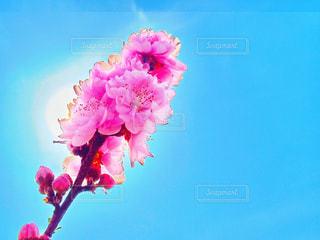 日光浴の写真・画像素材[1087741]