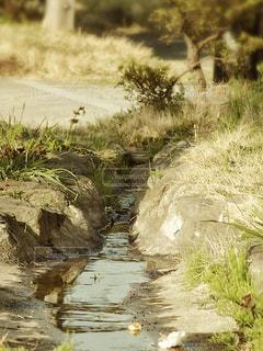 小川の写真・画像素材[1100834]