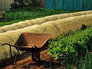 農作業の写真・画像素材[1104024]