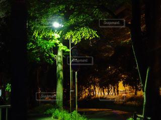 光を纏うの写真・画像素材[1131921]