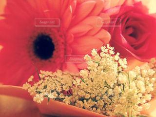 花束の写真・画像素材[1136822]