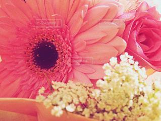 花束の写真・画像素材[1136823]