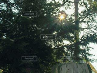 光の写真・画像素材[1141011]