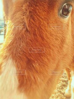 近くに動物のアップの写真・画像素材[1154720]