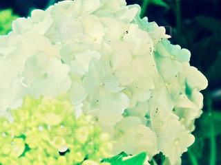 雨上がりの朝の写真・画像素材[1181818]