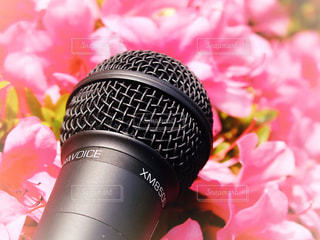 花とマイクの写真・画像素材[1189969]