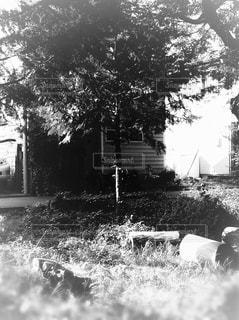 木の黒と白の写真・画像素材[1267601]