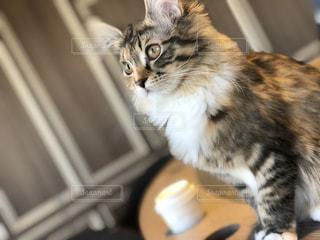 テーブルの上に座っている猫の写真・画像素材[1039180]