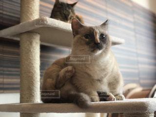 猫の写真・画像素材[1039183]