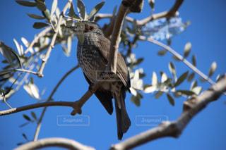 木の枝にとまった鳥の写真・画像素材[1039222]